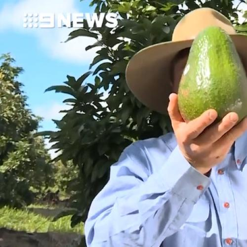 Giant Avos Are Here To Smash Everything