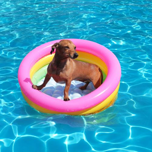 A Pool Party For Dogs Is Coming To Sydney