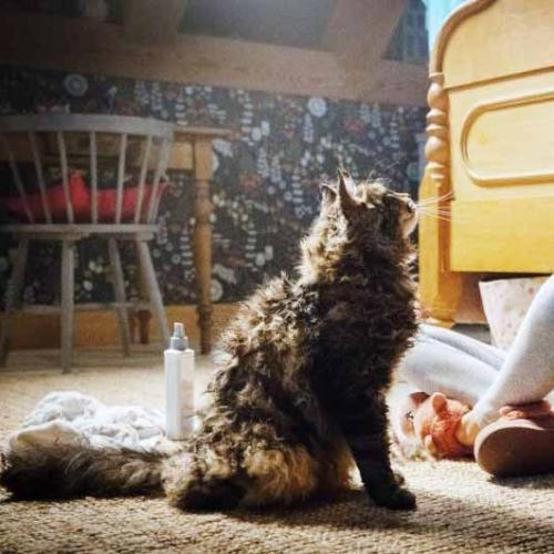 Stephen King Admits Being Haunted By 'Pet Sematary'