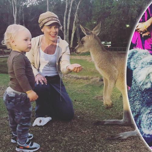 P!nk Shares Adorable Pics From Wildlife Sanctuary