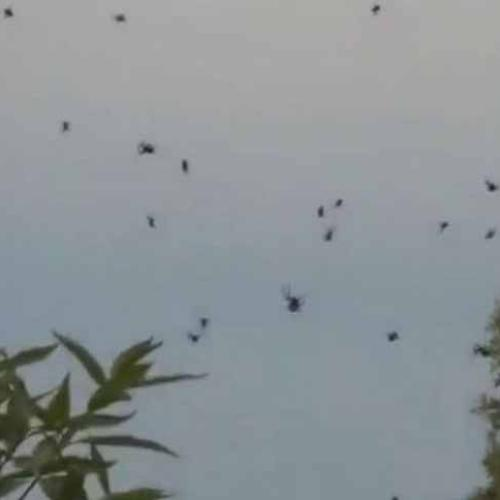 Spiders Appear To Rain Down In Brazil