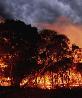 Bureau of Meteorology Issues Bushfire Warning For Parts Of NSW