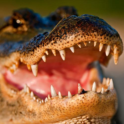 Police Warn Against Flushing Drugs Down The Toilet After An Increase In 'Meth-Gators'