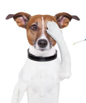 RSPCA Offering Free Vaccines Against Virus Killing Sydney Dogs