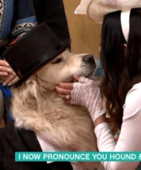 A Woman Has Married Her Dog On Live TV