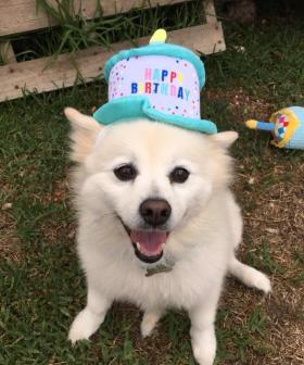 http://Our%20gorgeous%20fur%20baby%20kyia.%20She%20is%20an%208%20year%20old%20German%20Spitz.%20We%20rescued%20her%20from%20the%20pound%205%20years%20ago
