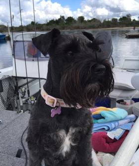 http://Poppy-Mae%20is%20our%206%20year%20old%20mini%20schnauzer%20who%20enjoys%20motor%20bike%20riding%20and%20barking%20at%20dolphins%20on%20the%20lake.