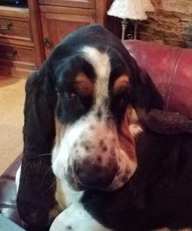 http://My%20Bentley%20Basset%20who%20not%20long%20before%20I%20took%20this%20photo%20had%20his%20left%20eye%20removed.%20He%20has%20just%20turned%201.