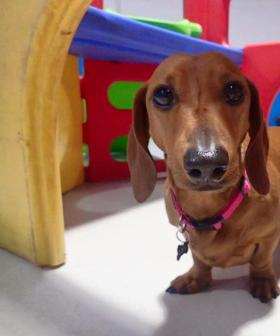 http://Lexi%20our%20Dachshund%20is%20a%205%20year%20old%20sausage.%20She%20loves%20cuddles%20and%20can%20always%20sniff%20out%20a%20treat.