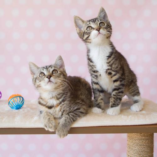Here's What You Can Do To Save A Cat This 'World Cat Day'