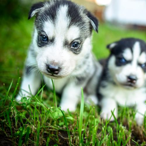 There's A New App That Lets You Borrow A Pup For The Day!