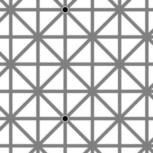 Are You Able To See All12 Black Dots In This Picture?