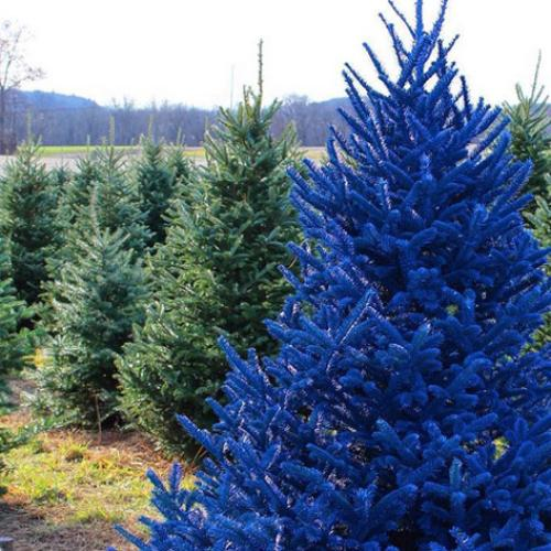 Colourful Christmas Trees Are The New 'GREEN' This Year