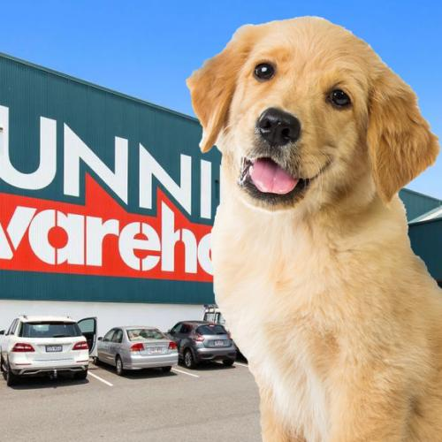 NSW Bunnings Stores To Host Pet Adoption Day