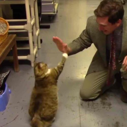 Hilarious Cat Shelter Video Is Low-Budget Purrfection