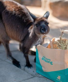Sydney Zoo Hosts The Ultimate Zoo Party For Its Furry Friends