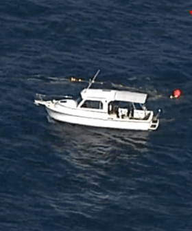 Whale Trapped In Netting Off Sydney's Northern Beaches