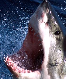 Two Men Seriously Injured In Shark Attack
