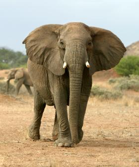 Elephant Kills Australian Man In Namibia