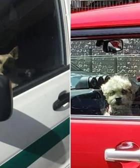 Two Dogs Left In Cars As Temperatures Hit Mid-30s