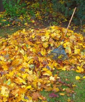 """Man Arrested For """"Trying To Have Sex With A Pile Of Leaves"""""""