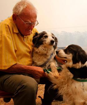 Pet Owners Advised On Bushfire Care