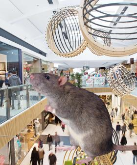 The Aussie Shopping Centre Overrun By Giant Rats
