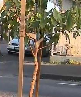 Aussie Residents Forced To Dodge Random Tree Planted In The Middle Of A Road