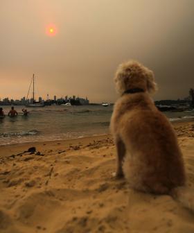Sydney Bushfire Smoke Labelled A 'Public Health Emergency'