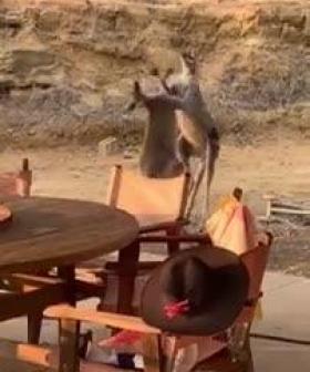 WATCH: Kangaroos Brawl In Aussie Backyard