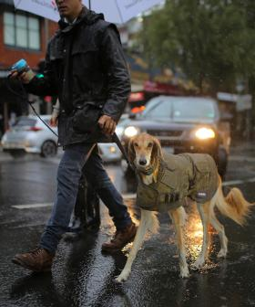 Miserable Weather And Cool Temperatures To Continue In NSW