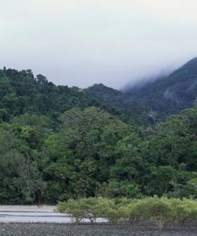Man Found Safe After 3 Weeks Missing in Queensland's Daintree Rainforest