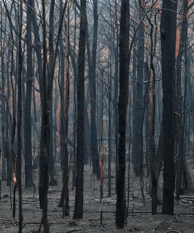 NSW Government Announces Bushfire Inquiry