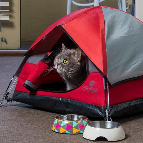 You Can Now Buy Camping Tents For Your Cat