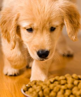 Popular Dog Food Brand Issues Recall After Discovery Of Mould