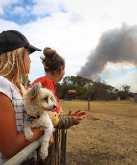 """""""It's The Crisis That Comes After The Crisis"""": John Brogden On Lifeline's Dedicated Support Line For Bushfire Victims"""