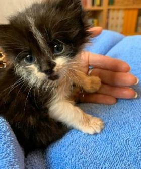 Can You Help Miri? Kitten Saved From Disgusting Act Of Animal Cruelty In Sydney