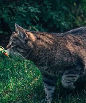 Adelaide Council Will Set Up Cameras To Spy On Your Cat