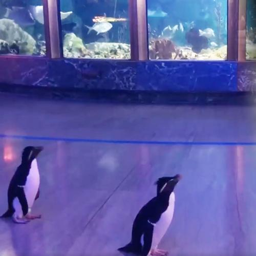 This Aquarium Shut Down, So Now These Penguins Get To Finally Experience It Like Tourists