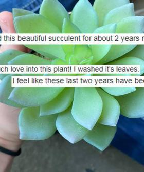 Aussie Woman Dedicates Years To Succulent Before Discovering The Awful Truth