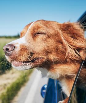 Uber Pets Has Launched in Sydney!