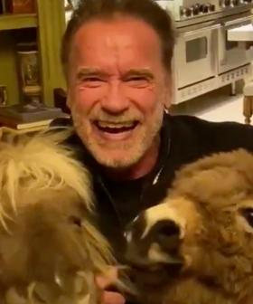 The Internet Is Going Crazy Over Video Of Arnold Schwarzenegger Self-Isolating With His Pet Donkey And Pony