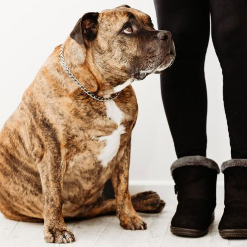 Our Dogs And Cats Are Getting Fat, And Self-Isolating With Them Could Be Making It Worse