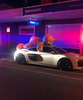 Giant Bear Cautioned For Not Wearing Seatbelt While Cruising Aussie Streets