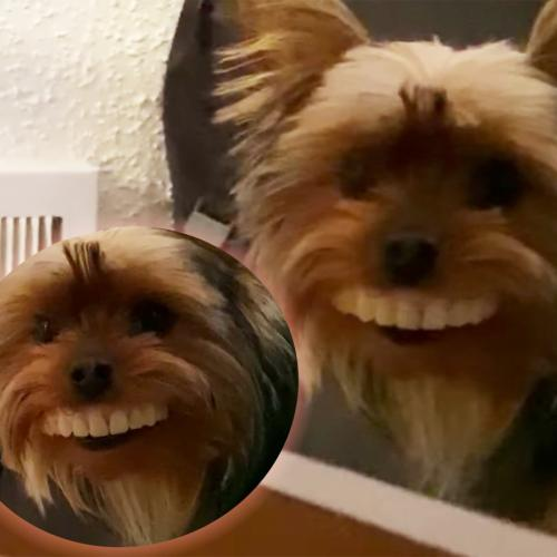 Hilarious Moment A Dog Steals His Owner's Giant Teeth