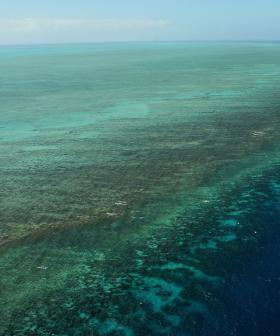 Young Man Dies After Being Mauled By Shark On The Great Barrier Reef