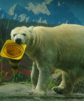 German Zoo Warns It May Need To Feed Some Of Its Animals to Others