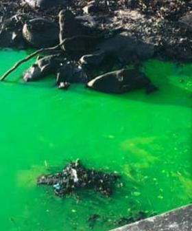 """""""It Needs To Be Checked"""": Mysterious Fluorescent Green Water Spews Out Of Sydney Drain"""