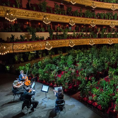 Barcelona's Opera Has Celebrated Its Reopening By Playing To An Audience Of... Plants