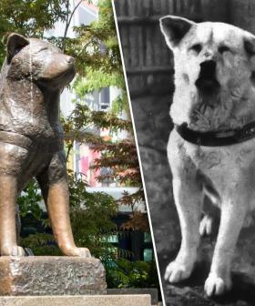 Amanda Keller Brings To Our Attention Japan's Hachiko Dog Statue